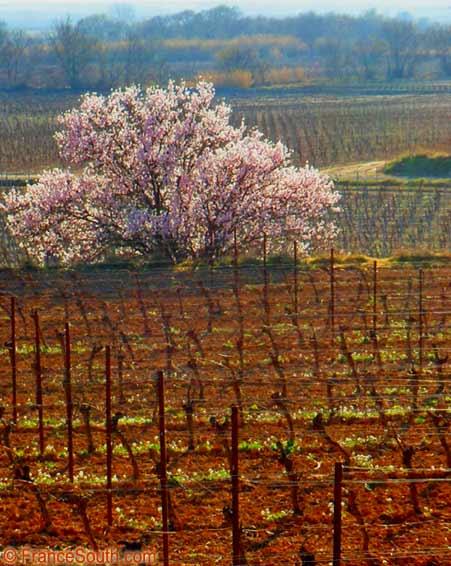vines spring